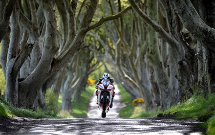 Michael Dunlop Dark Hedges Acrylic - click to enlarge
