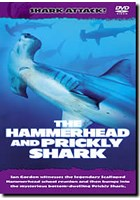 Shark Attack - The Hammerhead