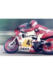 Eddie Lawson Transatlantic Trophy DonIngton 1984